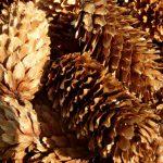 Czy plantacja choinek może być dobrym sposobem na biznes?